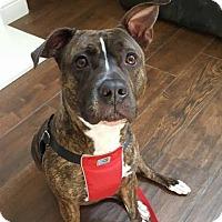 Adopt A Pet :: Mia - Pleasant Hill, CA