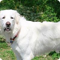 Adopt A Pet :: Frank - Garland, TX
