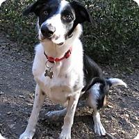 Adopt A Pet :: SUNNY - Corning, CA