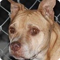 Adopt A Pet :: Simone - Las Vegas, NV