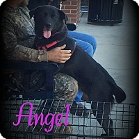 Adopt A Pet :: Angel - Denver, NC