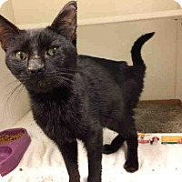 Adopt A Pet :: *CHESTER - Upper Marlboro, MD