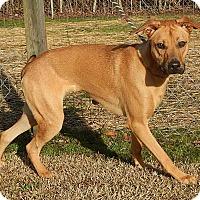 Adopt A Pet :: Axel - Newport, NC