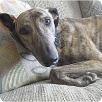 Adopt A Pet :: Cass - Carlsbad, CA