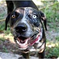 Adopt A Pet :: Meme - Richmond, VA