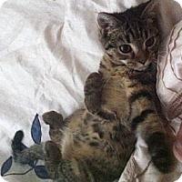 Adopt A Pet :: Arnette - Reston, VA