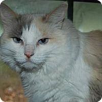 Adopt A Pet :: Samantha - Ennis, TX