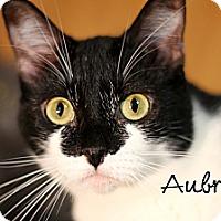 Adopt A Pet :: Aubrey - Wichita Falls, TX