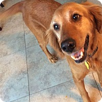 Adopt A Pet :: Allie - Denver, CO