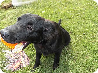 Spaniel (Unknown Type) Mix Dog for adoption in Osceola, Arkansas - Kori