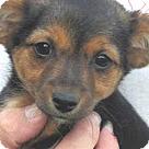 Adopt A Pet :: Hank Williams