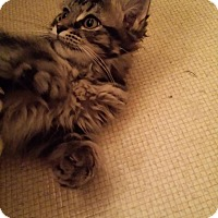 Adopt A Pet :: Taylor - Columbus, OH