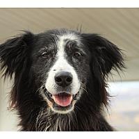 Adopt A Pet :: Jackie - Tempe, AZ