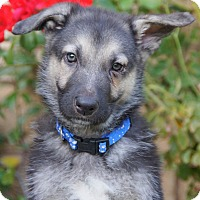 Adopt A Pet :: Kent von Geneva - Thousand Oaks, CA