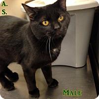 Adopt A Pet :: T-1 - Triadelphia, WV