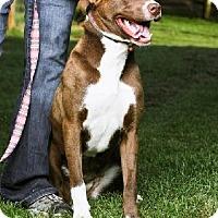 Adopt A Pet :: Brandy - Marion, NC
