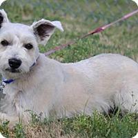 Adopt A Pet :: Demayo - Spring, TX