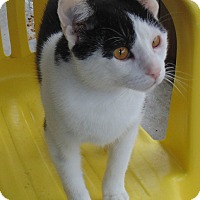 Adopt A Pet :: Tipsy - Jackson, MO