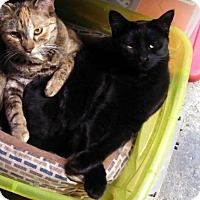 Adopt A Pet :: Alina - Lombard, IL