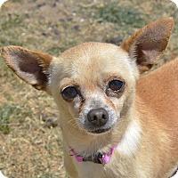 Adopt A Pet :: Marjorie - Meridian, ID
