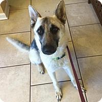 Adopt A Pet :: Harper - Portland, ME