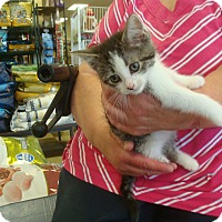 Adopt A Pet :: Lily - Middleton, WI