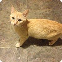Adopt A Pet :: April - Simpsonville, SC