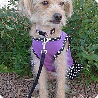Adopt A Pet :: Reba - Las Vegas, NV
