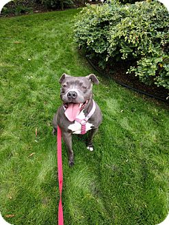 Pit Bull Terrier Mix Dog for adoption in San Francisco, California - Bonnie