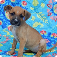 Adopt A Pet :: Thena (6 lb) Video! - West Sand Lake, NY