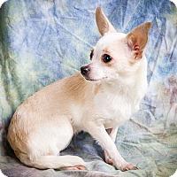 Adopt A Pet :: PORTIA - Anna, IL