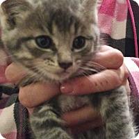 Adopt A Pet :: Jermane - Denver, CO