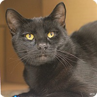 Adopt A Pet :: Richie - East Hartford, CT