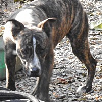 Adopt A Pet :: Jingles - Yucaipa, CA