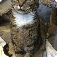 Adopt A Pet :: George - Breinigsville, PA