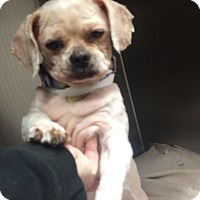 Adopt A Pet :: Lily - Oak Ridge, NJ