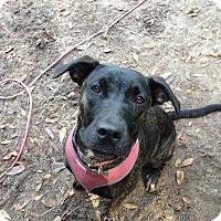 Adopt A Pet :: Lucy - Groveland, FL