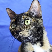 Adopt A Pet :: Posie - Winston-Salem, NC