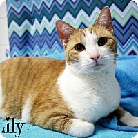 Adopt A Pet :: Lily - Florence, KY