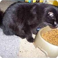 Adopt A Pet :: Yogi Bear - Delmont, PA