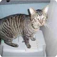 Adopt A Pet :: Todd - Hamburg, NY
