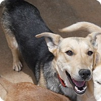 Adopt A Pet :: Tanya - dewey, AZ