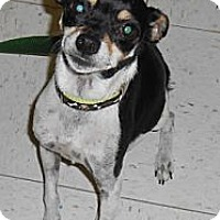 Adopt A Pet :: Sassy - Lockhart, TX