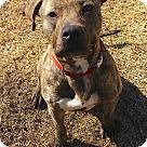 Adopt A Pet :: Karson
