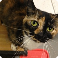 Adopt A Pet :: MetaLuna - Kelso/Longview, WA