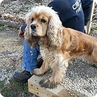 Adopt A Pet :: Barney - Ascutney, VT