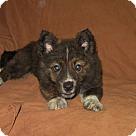 Adopt A Pet :: Rosa