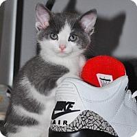 Adopt A Pet :: Aurora - Hamilton, ON