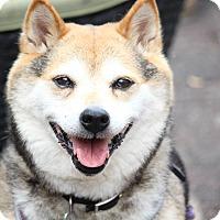 Adopt A Pet :: Maki - Manassas, VA