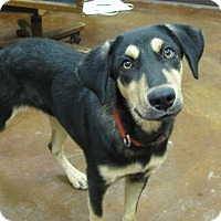 Adopt A Pet :: Ranger - Charlemont, MA